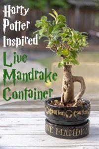 Easy Mandrake Pot Decoration