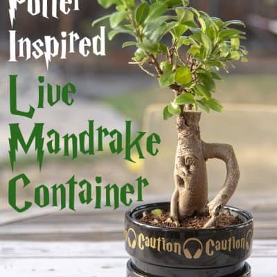Easy Mandrake Pot Decoration