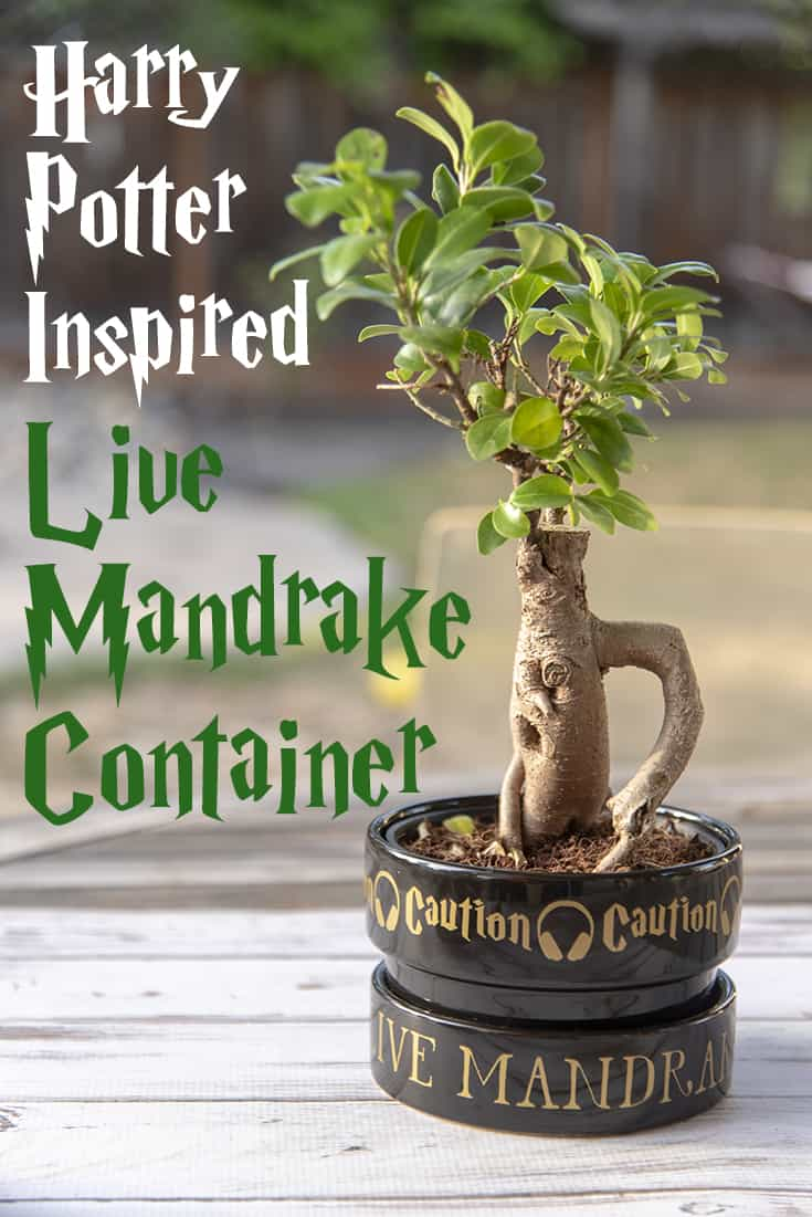 Make your own decorative Harry Potter inspired Mandrake container! #HarryPotter #Silhouette #VinylCutter