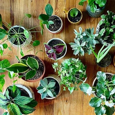 5 of the Easiest Indoor Plants to Care For