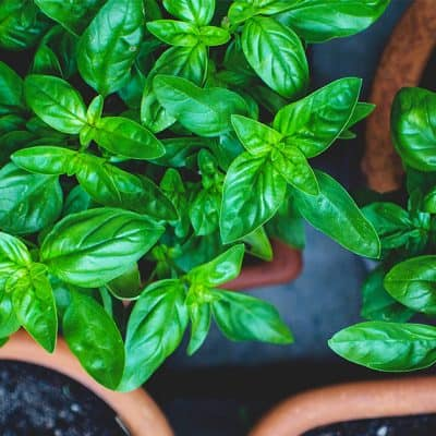 How to Create An Indoor Herb Garden in Your Kitchen